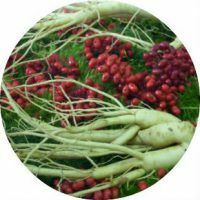 Application of ginseng root in folk medicine