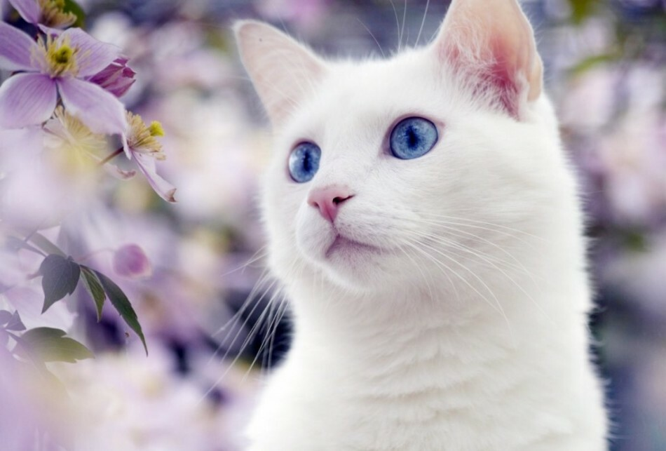 geest dier kat nacht energieen