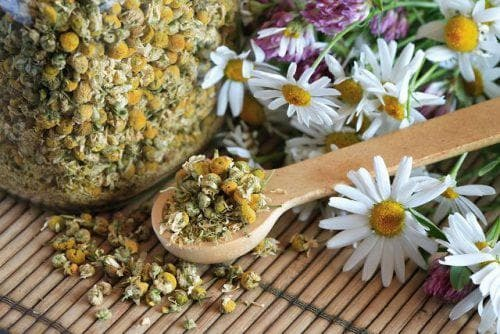 chamomile in dry condition